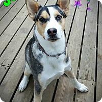 Adopt A Pet :: Jack - Warkworth, ON