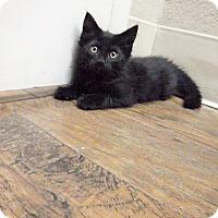 Adopt A Pet :: Bagheera - Dublin, CA