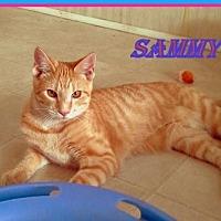 Adopt A Pet :: Sammy - Berkeley Springs, WV