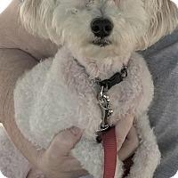 Adopt A Pet :: Maisey - Sacramento, CA