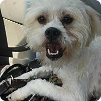 Adopt A Pet :: Porter - McKinney, TX
