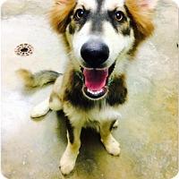 Adopt A Pet :: Lobito (available 7/27) - Sanford, NC