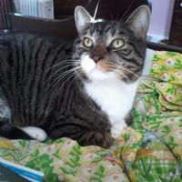 Adopt A Pet :: Neko - Kinston, NC