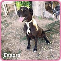 Adopt A Pet :: Endora - DeForest, WI