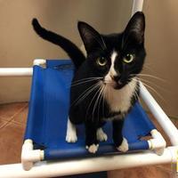 Adopt A Pet :: Mama - Miami, FL