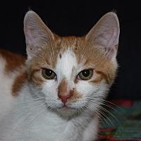 Adopt A Pet :: Stiller (LE) - Little Falls, NJ