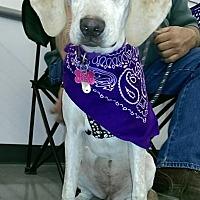 Adopt A Pet :: Darby - Albemarle, NC