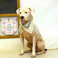 Adopt A Pet :: GOTHAM - Sanford, FL