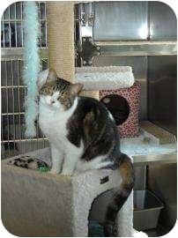 Domestic Shorthair Cat for adoption in Florence, Oregon - Savannah