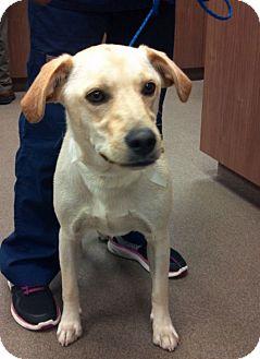 Labrador Retriever Mix Dog for adoption in Cumming, Georgia - Sophie