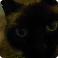 Adopt A Pet :: Simon - Saint Albans, WV