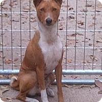 Adopt A Pet :: Anubis - Seminole, FL