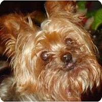 Adopt A Pet :: FiFi - Plainfield, CT