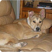 Adopt A Pet :: ODIE- Adopted! - Brooksville, FL