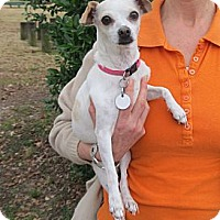 Adopt A Pet :: Bellerina - Kingwood, TX