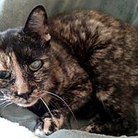 Adopt A Pet :: Raquel (LT) - Trenton, NJ