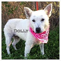 Australian Cattle Dog Mix Dog for adoption in Comanche, Texas - Dolly