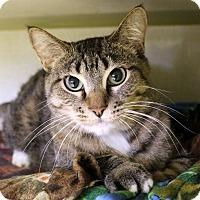 Adopt A Pet :: Mommaska - Chicago, IL