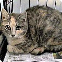 Adopt A Pet :: Ariel - Jefferson, NC