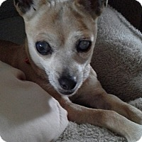 Adopt A Pet :: Wendy: loves people! (PA) - Madison, WI