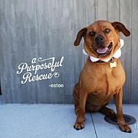 Adopt A Pet :: Estee - West Los Angeles, CA