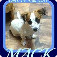 Adopt A Pet :: MACK - Sebec, ME