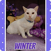 Adopt A Pet :: Winter - Arlington/Ft Worth, TX
