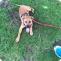 Adopt A Pet :: Triton - Poway, CA