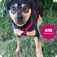 Adopt A Pet :: Nora - Wyandotte, MI