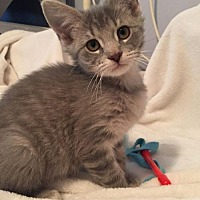 Adopt A Pet :: Petunia - Fairmont, WV