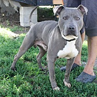Adopt A Pet :: Gator - Fort Madison, IA