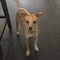 Adopt A Pet :: Radish - Houston, TX