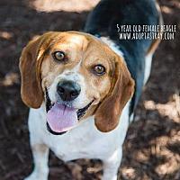 Adopt A Pet :: Sooner - Newport, KY
