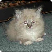 Adopt A Pet :: Tawny - cincinnati, OH