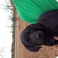 Adopt A Pet :: Izzy - Marlton, NJ