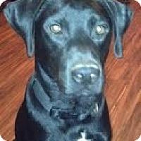 Adopt A Pet :: Remington - Lewisville, IN