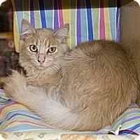 Adopt A Pet :: Palmer - New Port Richey, FL