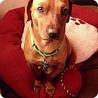Adopt A Pet :: Toby - Plainfield, IL