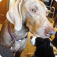 Adopt A Pet :: Olive - Grand Haven, MI