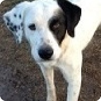 Adopt A Pet :: zzRuby - Dallas, TX