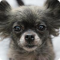Adopt A Pet :: Jade *ADOPTION PENDING* - Romeoville, IL