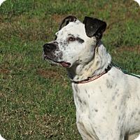 Adopt A Pet :: Mitzi - Marble Falls, TX