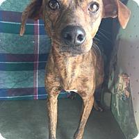Adopt A Pet :: Sammy-pending adoption - East Hartford, CT