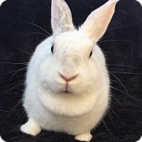 Adopt A Pet :: Colette - Watauga, TX