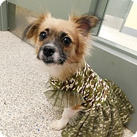 Adopt A Pet :: Tulip - West Deptford, NJ