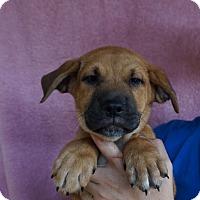 Adopt A Pet :: Ford - Oviedo, FL