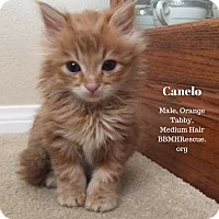 Adopt A Pet :: Canelo - Temecula, CA