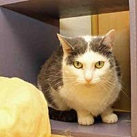 Adopt A Pet :: ROSEBUD - Pittsburgh, PA