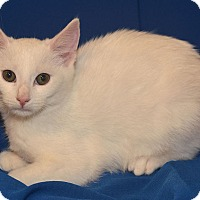 Adopt A Pet :: Frosty - Stevensville, MD