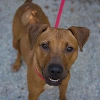Adopt A Pet :: Elektra - Decatur, GA